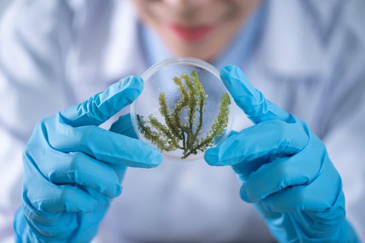 Good News 2020-2021 plants in a petri dish