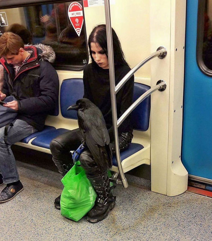 17 Adorable Animals Spotted On Public Transport, raven on subway