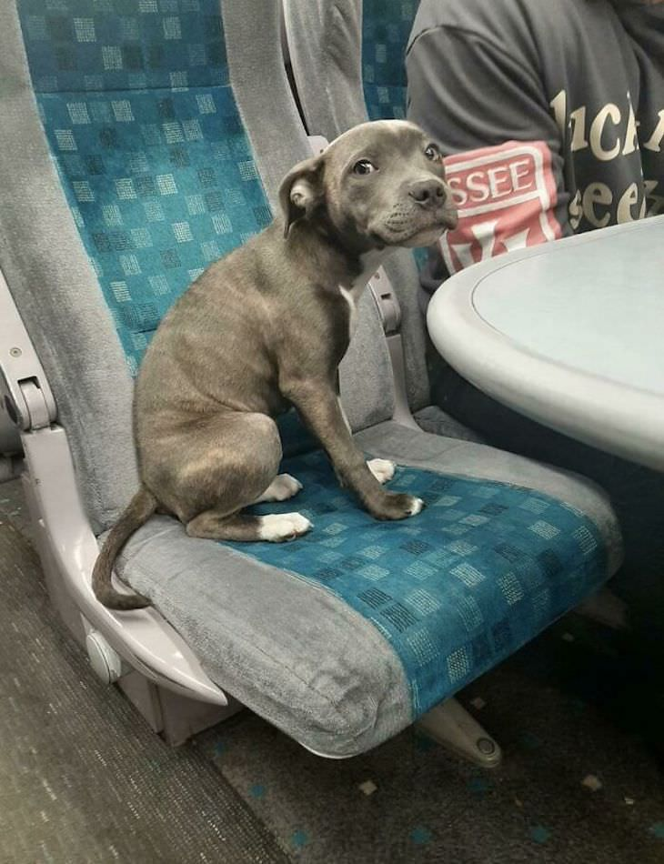 17 Adorable Animals Spotted On Public Transport, dog on train