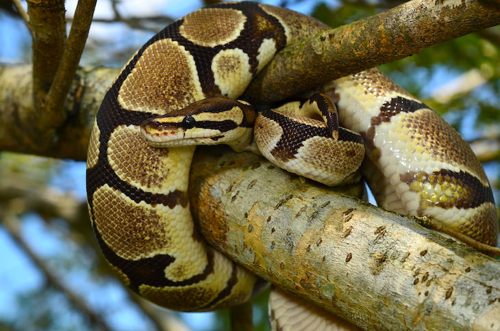 6 Newly Discovered and Incredible Animal Abilities, snake on a tree