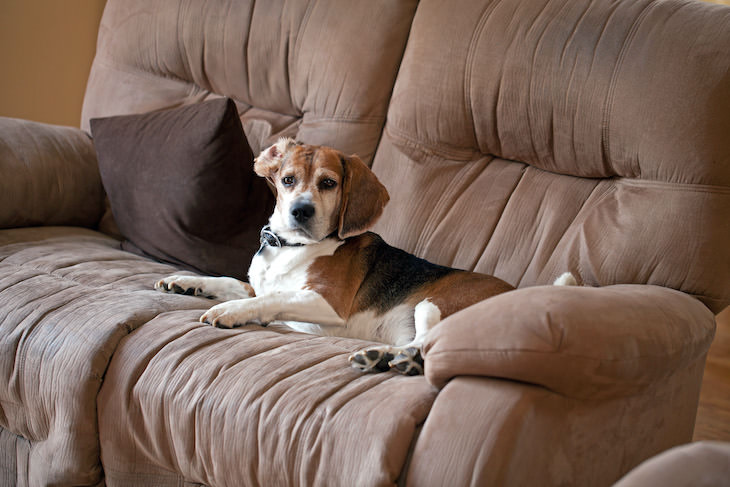 How to Clean 8 Types of Couches, microfiber