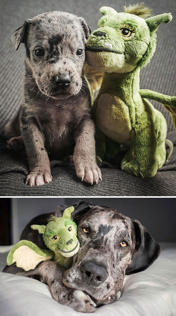 Dogs Before & After They Grew Up, plush toy