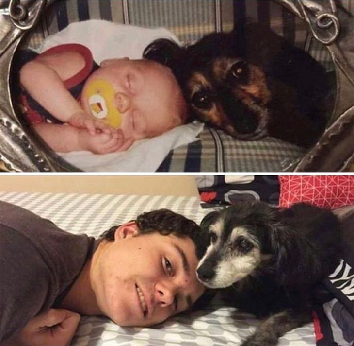 Dogs Before & After They Grew Up, best friends