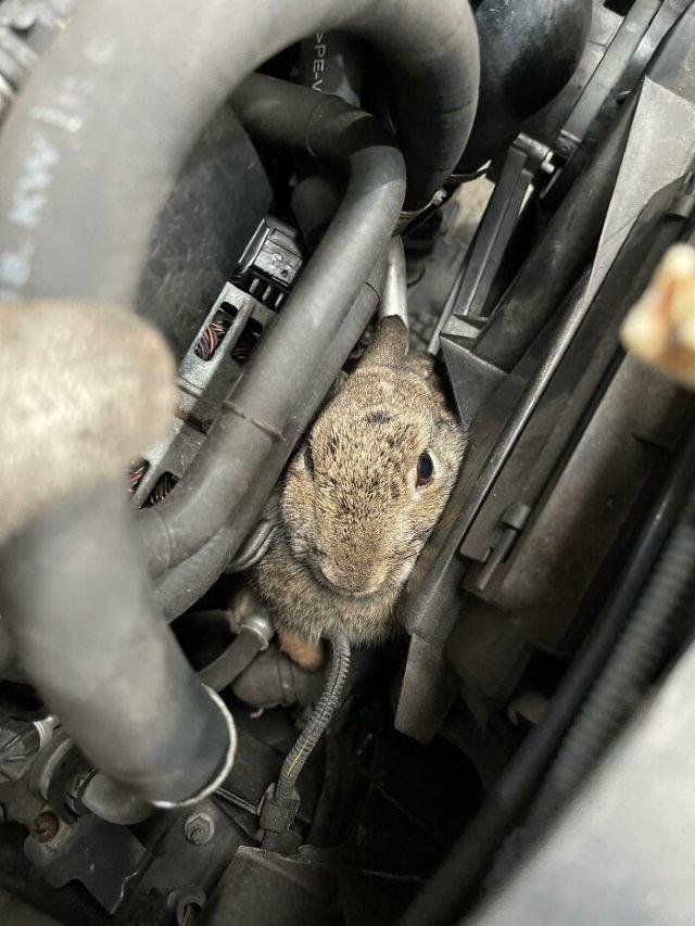 Car Repair rabbit