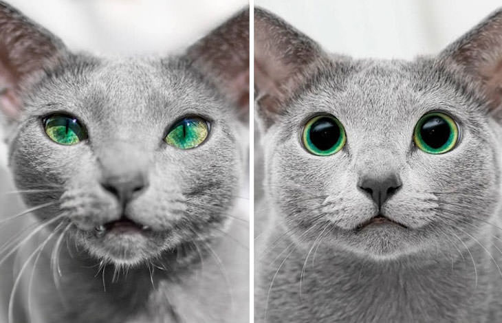 20 Eye Opening Comparison Photos, the same cat's eyes day vs night