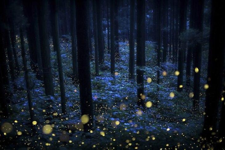 Tokyo International Foto Awards, Fairies