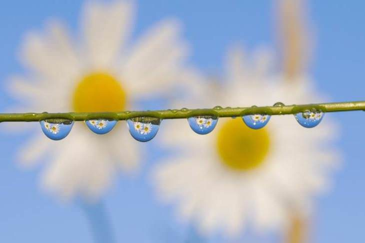 21 Stunning Spots Around the World, Flowers reflecting in the morning dew