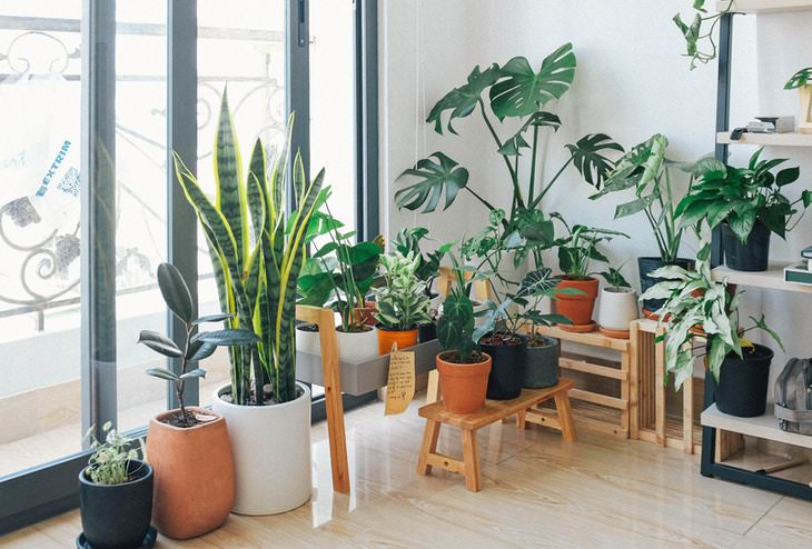 Plants and Clean Air indoor plnts