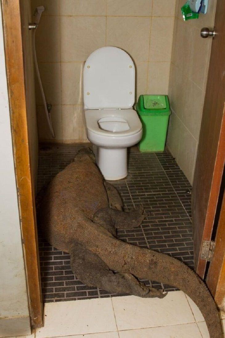 Funny Animal Photos reptile