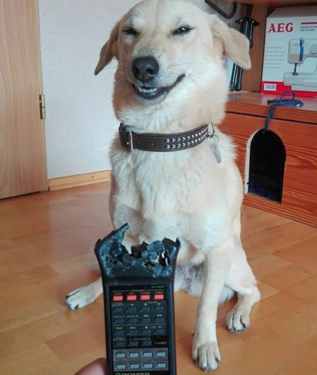 Cheeky Pets remote
