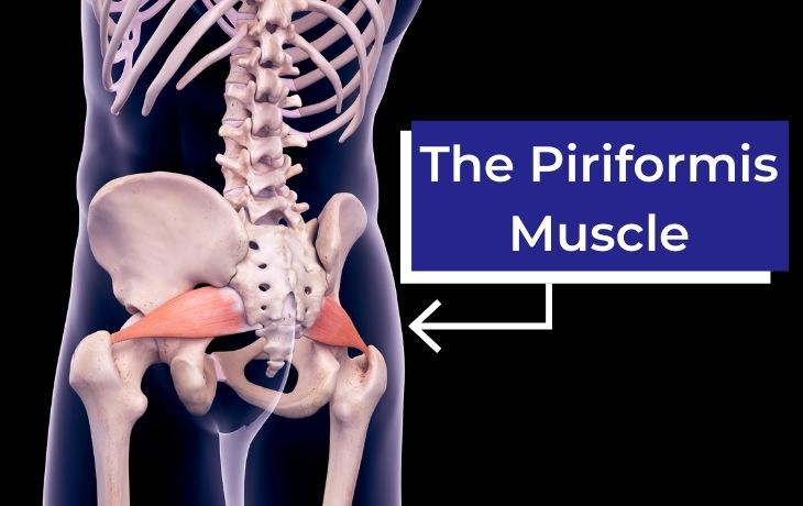Piriformis Syndrome Piriformis muscle location