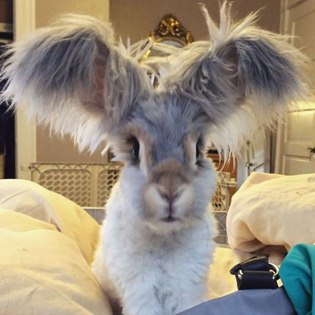 Cute Animals Wally bunny