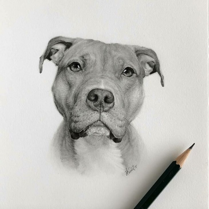 Hyper-Realistic Animal Sketches, dog