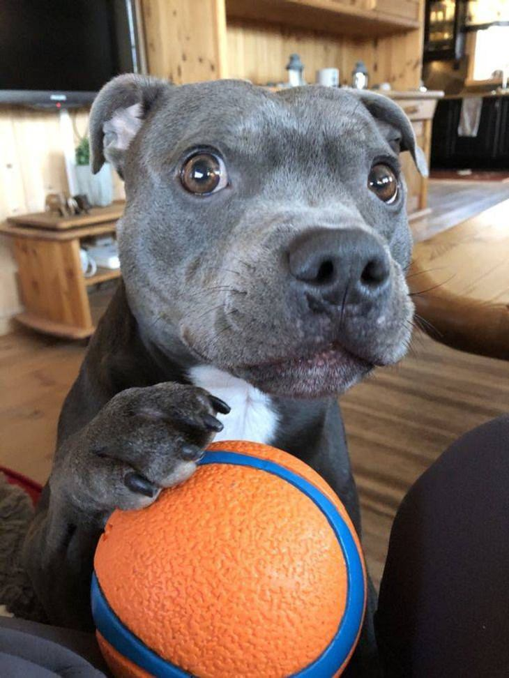 Pets needing attention, ball