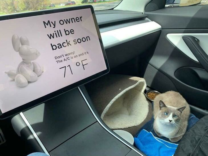 Cleverly Designed Products That Make Life Easier sign for pet owners in Tesla