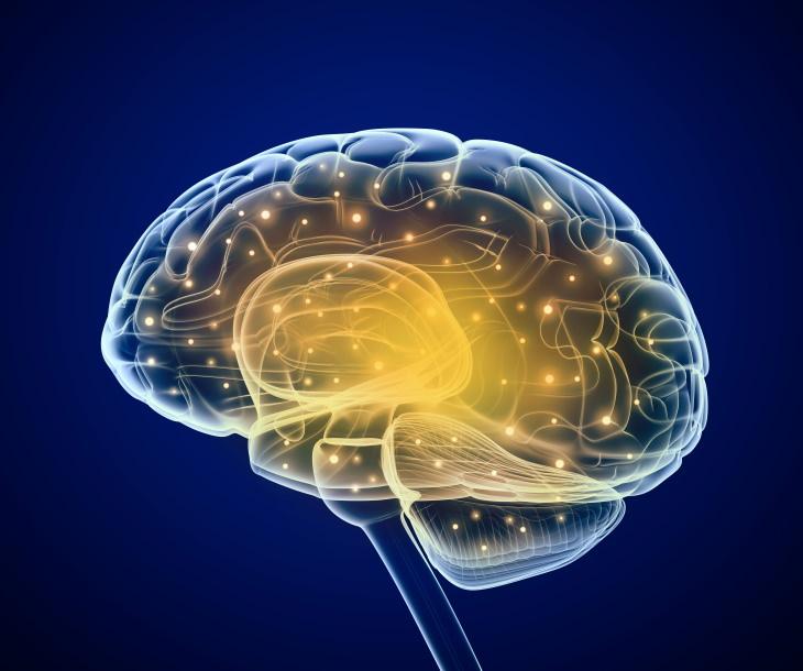 ¿Cómo actúa la oxitocina?