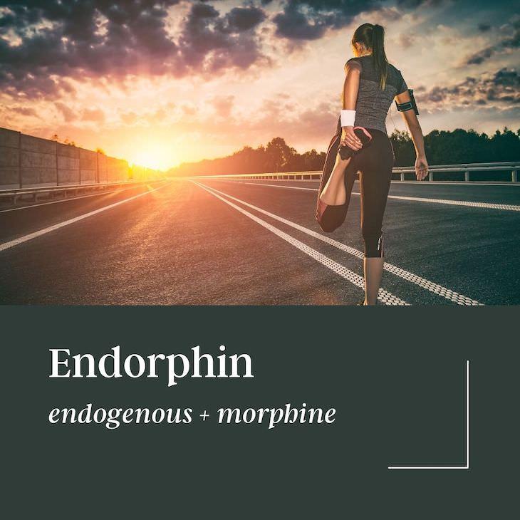 What's Portmanteau? Surprising Etymologies of Common Words, endorphin