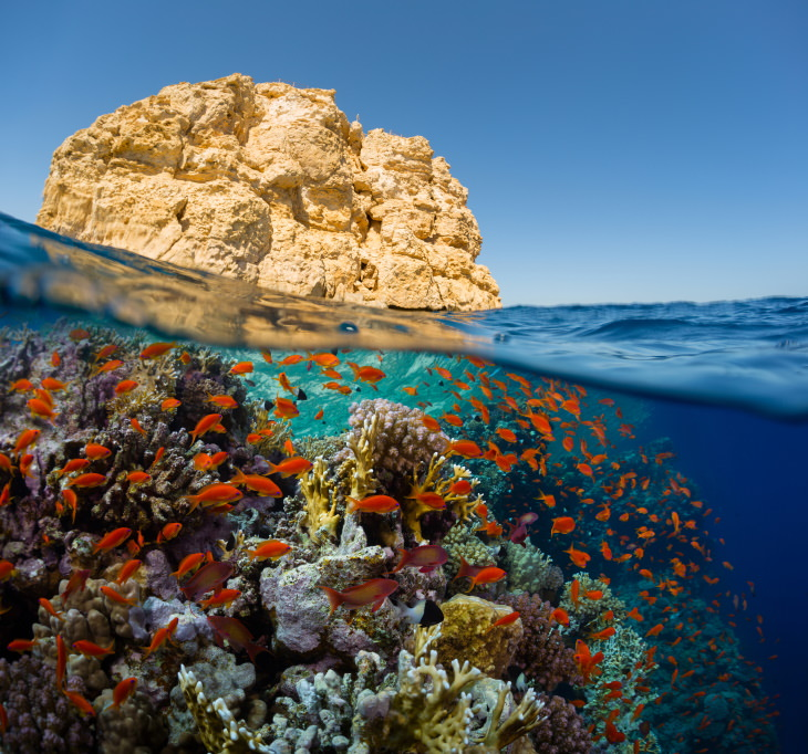 Coral Reefs The Red Sea Coral Reef