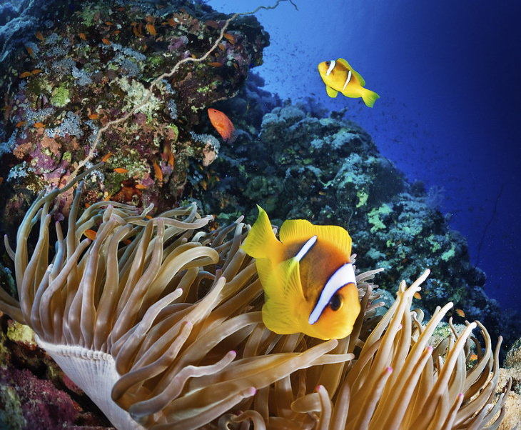 Coral Reefs The Great Barrier Reef, Australia