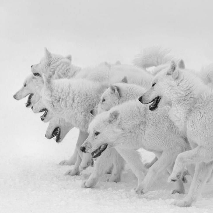 Award Winning Images of Nature and Wildlife Devotion byPatrick Ems