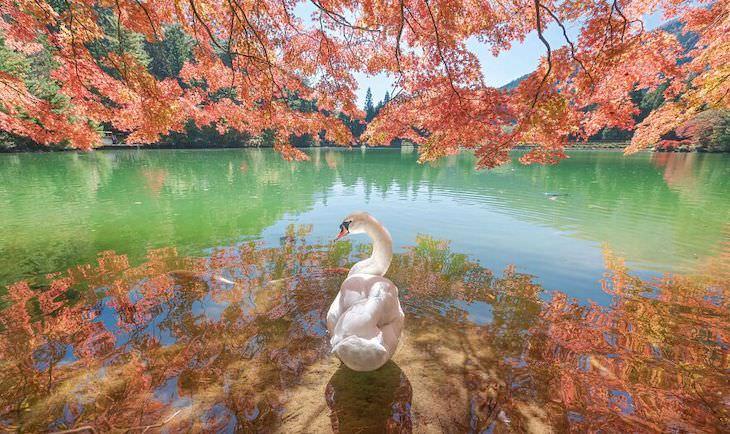 Award Winning Images of Nature and Wildlife Beauty Looking BackbyAsuka Inukai