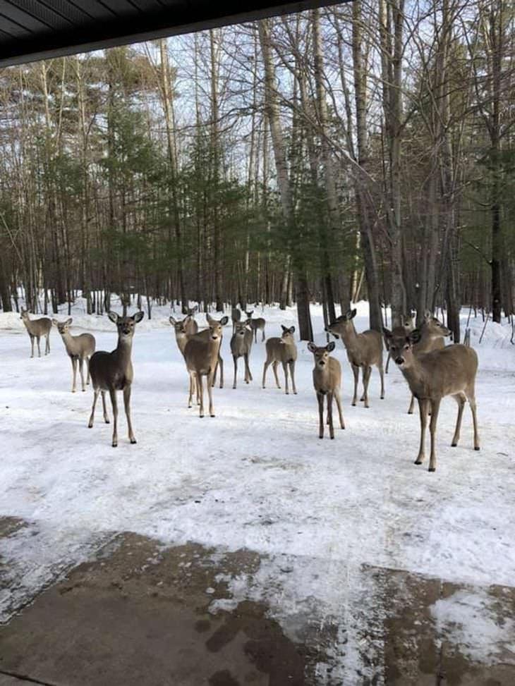 Pets Acting Like Humans deer