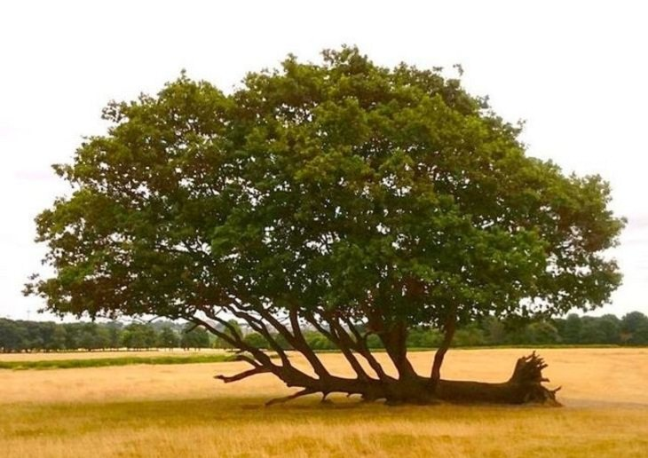 Nature Finds a Way, tree