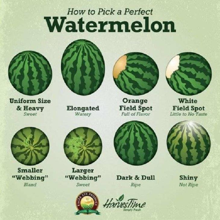 Fun Charts, watermelon