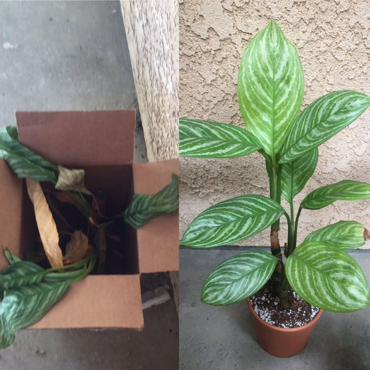 Neglected Plants Before and After 1 year