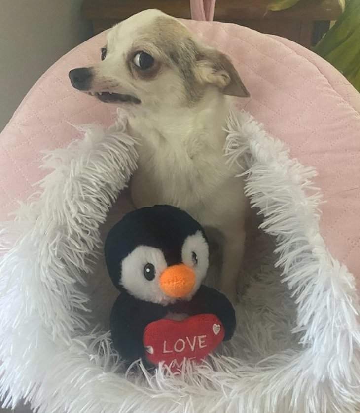 Dogs Caught In Funny and Bizarre Situation, Just posing dor the camera with his favorite plush toy
