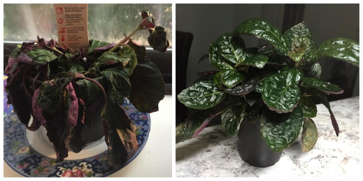 Neglected Plants Before and After dull plant