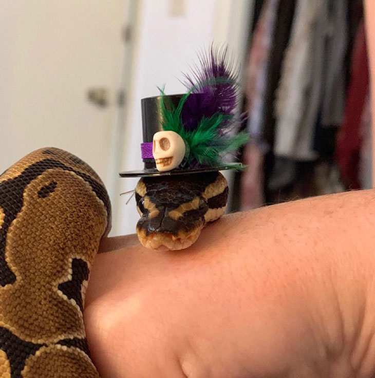 16 Funny Photos of Snakes in Hats, hat with skull