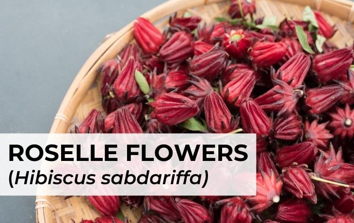 Hibiscus Tea Roselle flower