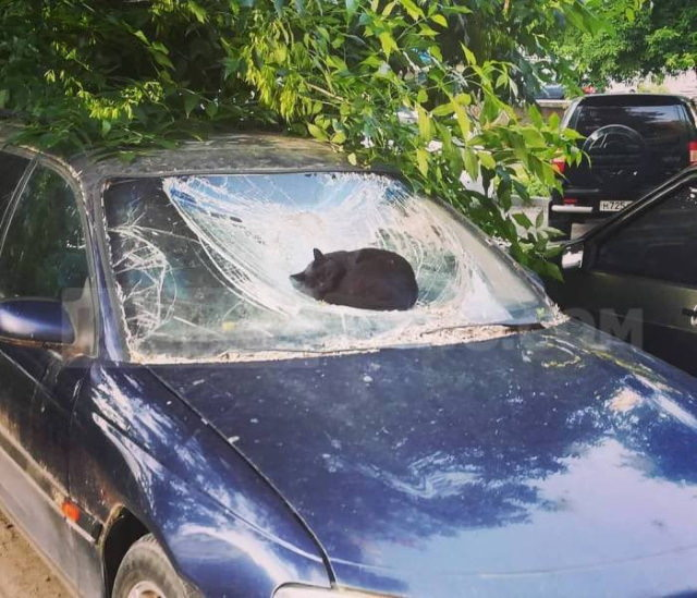 cats chilling in odd places dent in the car