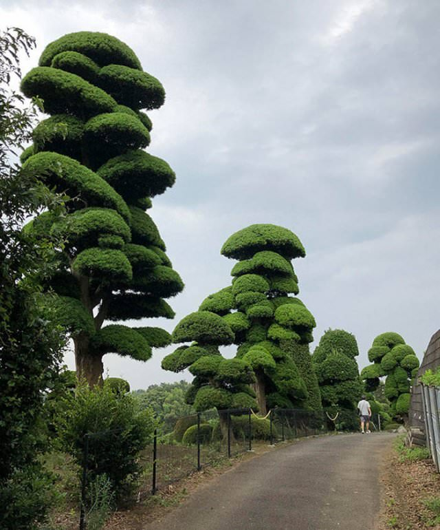 Amazing Places giant trees in Japan