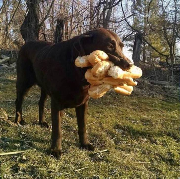 Pets and Kids Caught in Sweet and Silly Moments dog stealing bread