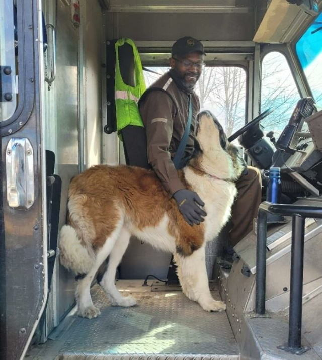 UPS Drivers Take Pictures With Dogs Charlie gives Eric big snobbery Saint Bernard kisses.