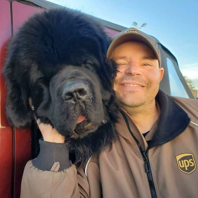 UPS Drivers Take Pictures With Dogs MeetNarwhal and Burton from Brooklyn, Connecticut