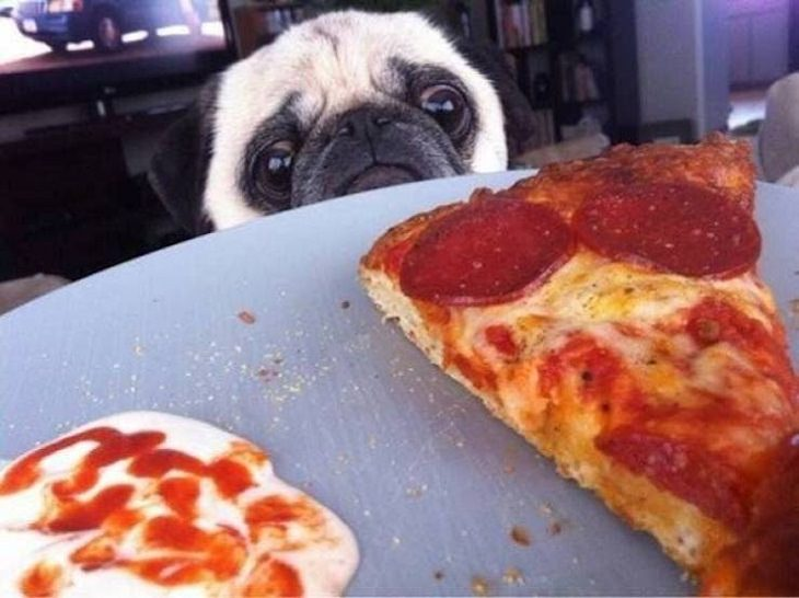 Funny Animals, pizza