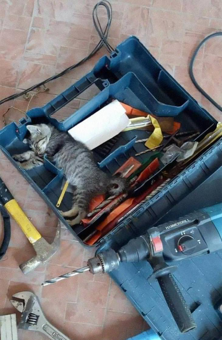 Cute Cats Who Have Day Jobs repair kitty