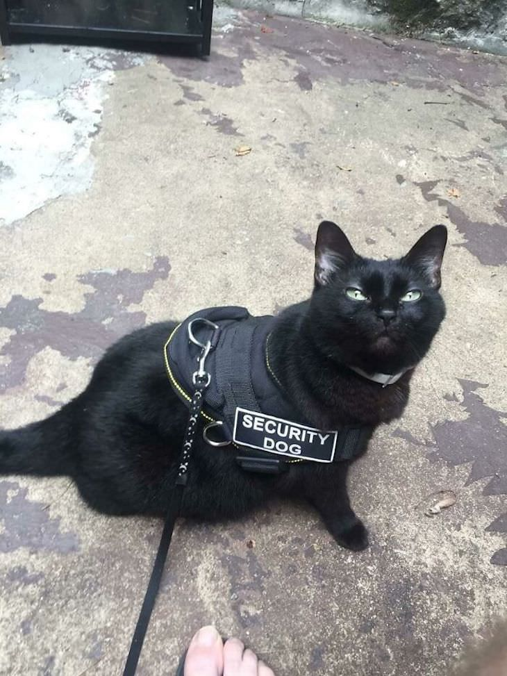Cute Cats Who Have Day Jobs security dog/cat