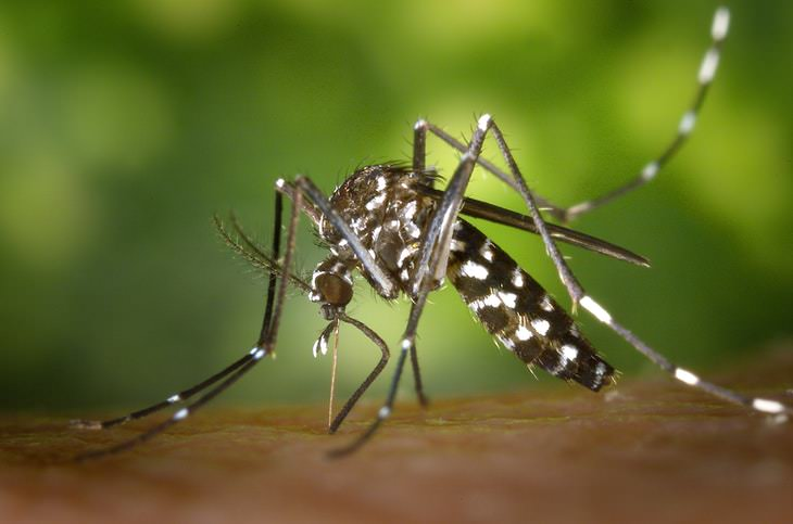 Blood-Curdling Facts Mosquitoes