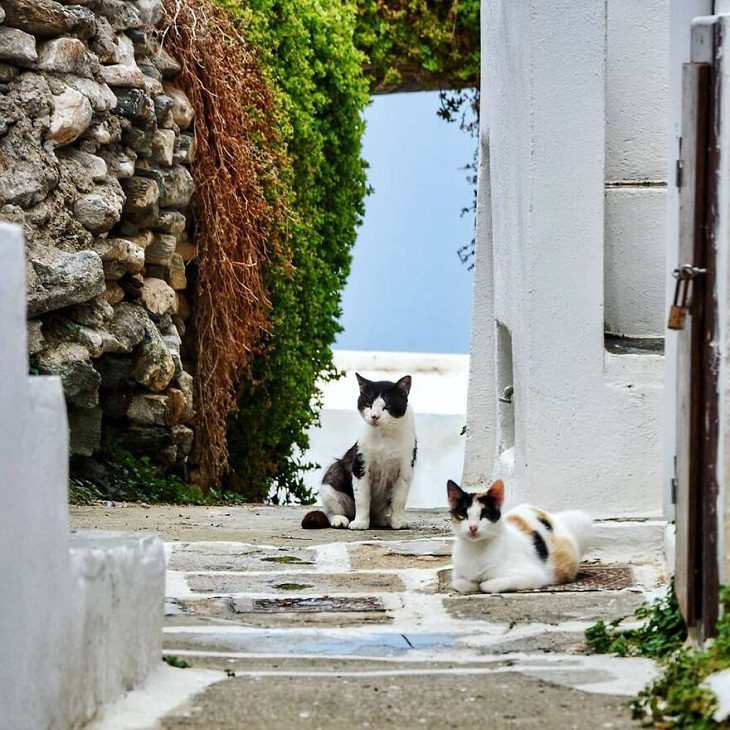 Sifnos Island, cats