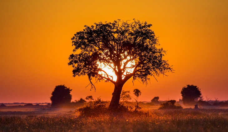 Facts about the African Savanna, not the only savanna