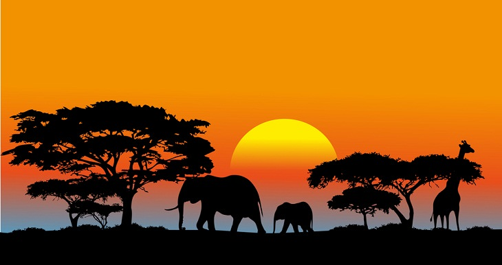 Facts about the African Savanna, ecosystem