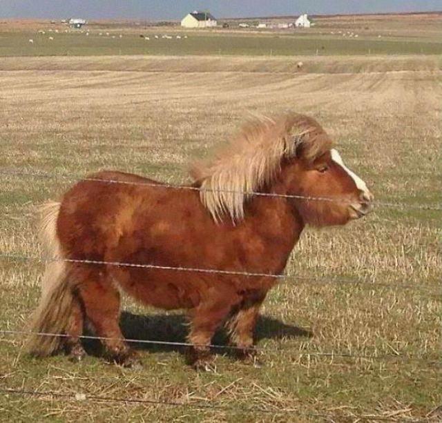 20 Unusually Large Animals pony
