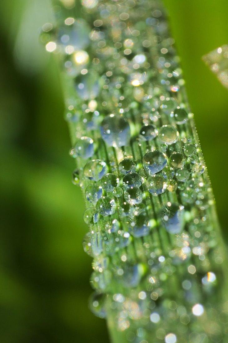 Macro Pics, Dew On Grass