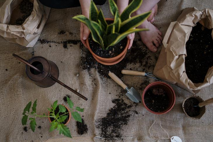 Coffee Filters in Potted Plants repotting