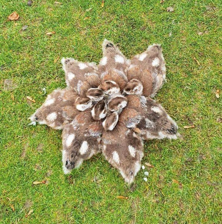 Confusing photos, huddling ducklings
