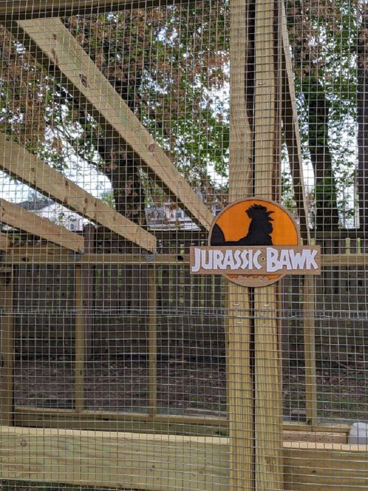 Chicken Coops, Jurassic Bawk